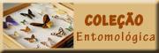 Coleção Entomológica